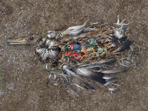 Conferencia sobre El Plástico Mata en Barcelona